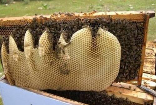 μελισ